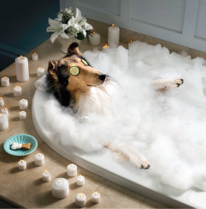 Perfect paws grooming spa spa packages for A bath and a biscuit grooming salon