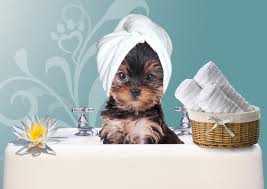 Perfect paws grooming spa spa treatments for A perfect pet salon